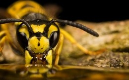 Macro photo of bee