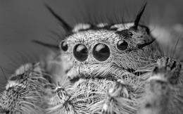 Macro photo of the head spider
