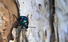 Multi-colored beetle