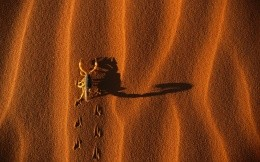 Scorpio in the desert