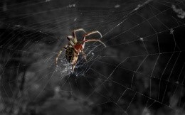 The spider weaves a web