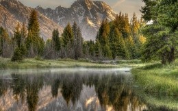 Mountain Lake spruce forest