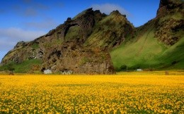 Valley of the field of dandelions