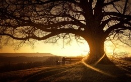 A century-old tree and a bench, on a background of a sunset stylish wallpapers, nature