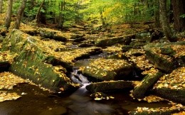 Autumn creek in the national park of New York City, the theme of nature and the seasons - autumn wallpaper.