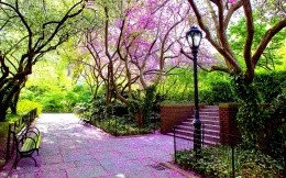 Beautiful avenue of trees and shrubs