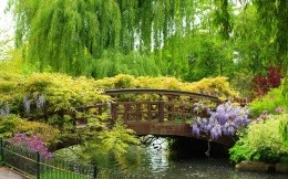 Beautiful river bridge and trees