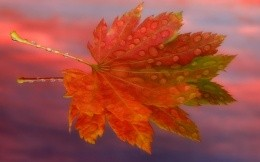 Bright autumn leaf on the water wallpaper - the theme of autumn.