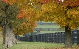 Farm with grazing horses and autumn trees, photo wallpaper
