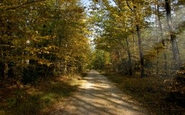 Forest dirt road, autumn wallpaper.