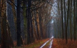Forest road in autumn forest