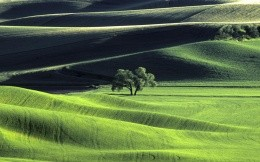 Gentle rolling hills and tree
