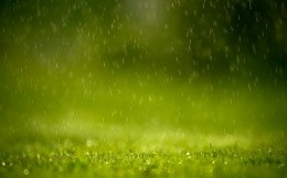 Green grass and summer rain