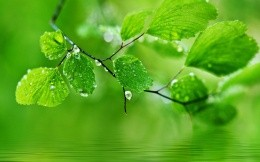 Green leaves droplets