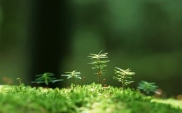 Macro photo shooting forest vegetation of moss