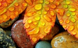 Natural wallpapers, autumn leaves, rocks and water droplets.