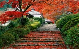 Stayrskeys Garden, Kyoto, Japan - photo wallpaper - nature