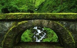 Stone Bridge - the background wallpaper, wood, trees, moss, nature, greenery, stone bridge