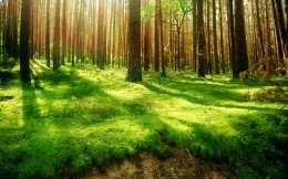 Summer forest and bright green grass