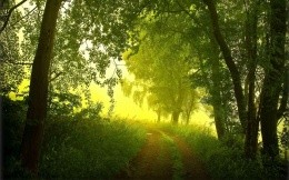 summer, morning, fog, forest, road, trees