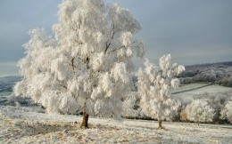 Trees frost