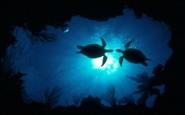 Turtles in the underwater world
