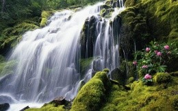 waterfall with rhododendron
