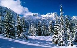 Winter fir forest in the mountains, for the new year