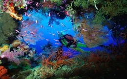 A beautiful underwater world and the lone diver wallpaper