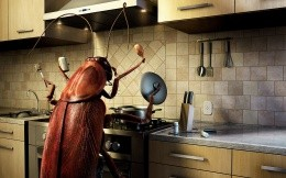 A giant cockroach in the kitchen