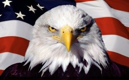 Bald eagle against an American flag