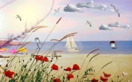red poppies and white sailboat