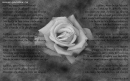 Rose and poems - black and white image for the desktop