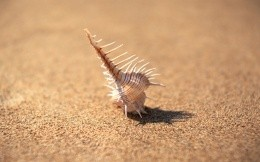Shell in the sand - a background for your desktop