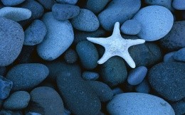 Starfish and round stones, cute wallpaper