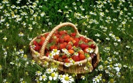 strawberries in a basket on glade
