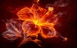 The flower of the flames