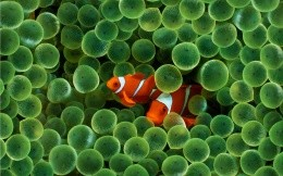 The underwater world of fish and color, wallpaper for Mac OS X Tiger HD - other topic.