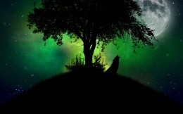The wolf howls under the tree on the moon