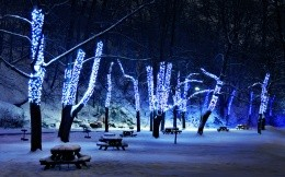 trees decorated with fairy lights
