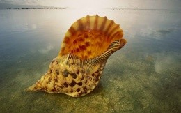 Seashell from ocean depths