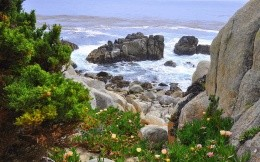Stone Beach and coastal flowers