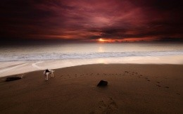 The dog on the coast at sunset