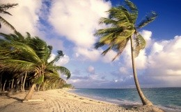 Wild beach, sea, palm trees, sky - wallpaper