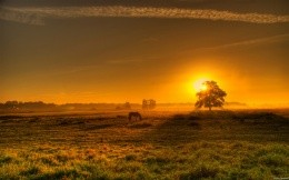 Beautiful sunset and grazing horse