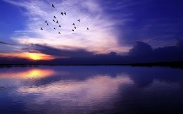 Sunset over the lake and a flock of birds in the sky