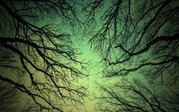 Tree branches against a green sky