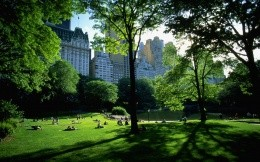 Views of Central Park in New York