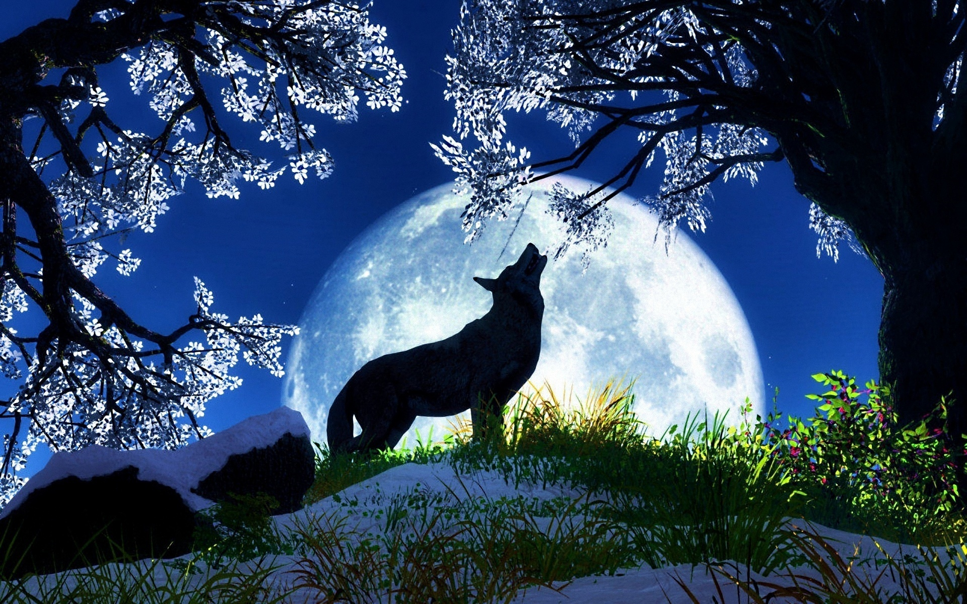 A wolf at the moon