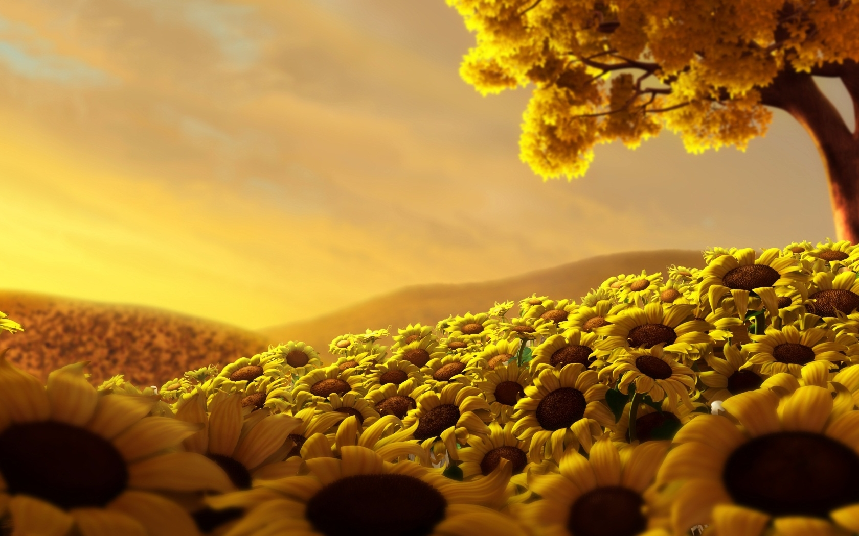 City of sunflowers